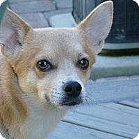Adopt A Pet :: Simba adoption pending - Victor, MT