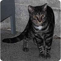 Adopt A Pet :: Hansel - Warminster, PA