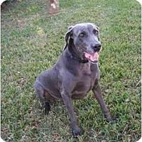 Adopt A Pet :: **ADOPTED**  Lexi - Eustis, FL