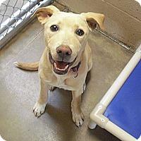 Adopt A Pet :: Leia - Wickenburg, AZ