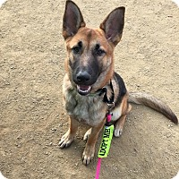 Adopt A Pet :: Sophie- I love kids and dogs! - Redondo Beach, CA