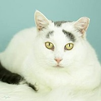 Domestic Shorthair Cat for adoption in Whitewater, Wisconsin - Ginger