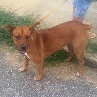 Adopt A Pet :: Jackie - Remlap, AL