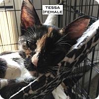 Adopt A Pet :: Tessa - Santa Monica, CA