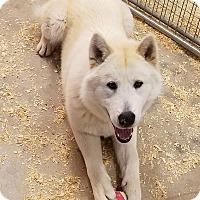 Adopt A Pet :: Rory - Denver, CO