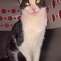 Adopt A Pet :: Isaac - Columbus, OH