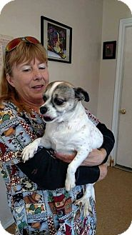 Chihuahua/Pug Mix Dog for adoption in Middleton, Wisconsin - Paris