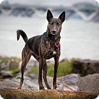 Adopt A Pet :: Trixi - Alexandria, VA