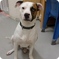 Adopt A Pet :: Freddy - Frenchburg, KY