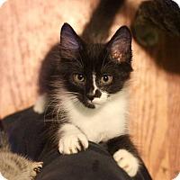 Adopt A Pet :: Chirizo - Wilmington, NC