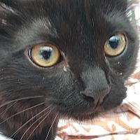 Adopt A Pet :: Vetra - Woodland, CA