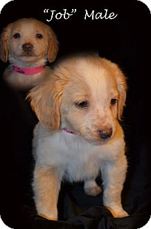 Beagle Mix Puppy for adoption in Pioneer, Tennessee - JOBE