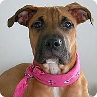 Adopt A Pet :: Izzy - Monteregie, QC