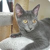 Adopt A Pet :: Sophia - Bayonne, NJ