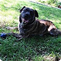 Adopt A Pet :: Simone - Saskatoon, SK