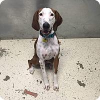 Adopt A Pet :: Clyde - Cedar Rapids, IA