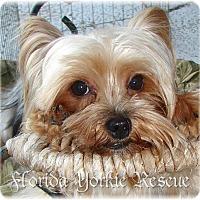 Adopt A Pet :: Annie - Palm City, FL