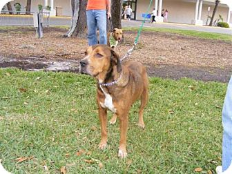 Hound (Unknown Type) Mix Dog for adoption in Melrose, Florida - Lolly