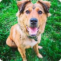 Adopt A Pet :: Hetty - Memphis, TN