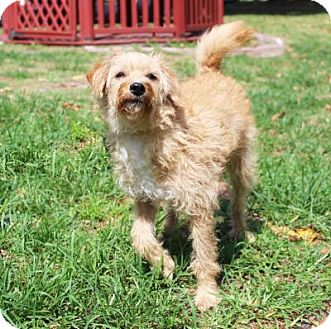 Terrier (Unknown Type, Small) Mix Dog for adoption in Boca Raton, Florida - Flower Love