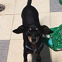 Adopt A Pet :: Jerry - York, SC