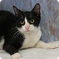 Adopt A Pet :: Teela - Midland, MI