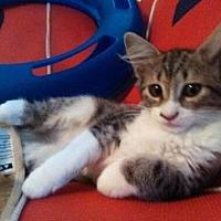 Adopt A Pet :: Carmen - Long Beach, CA