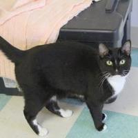 Adopt A Pet :: Kerby - Thomasville, GA