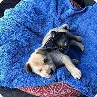 Adopt A Pet :: Winkie - Hedgesville, WV