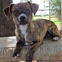 Adopt A Pet :: Riley - Wichita Falls, TX