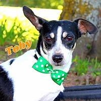 Adopt A Pet :: Toby - Batesville, AR
