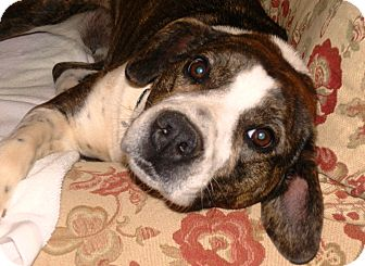 Terrier (Unknown Type, Medium)/Labrador Retriever Mix Dog for adoption in Marietta, Georgia - Sophie