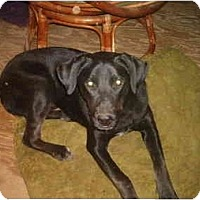 Adopt A Pet :: Cody - North Jackson, OH