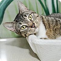 Adopt A Pet :: Shoshanna - New York, NY
