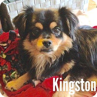 Spaniel (Unknown Type) Mix Dog for adoption in Tijeras, New Mexico - Kingston