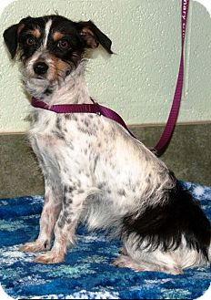 Terrier (Unknown Type, Medium) Mix Dog for adoption in Ada, Oklahoma - MEDEA