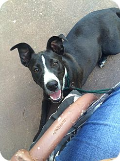 Border Collie Mix Dog for adoption in WAGONER, Oklahoma - Guinn
