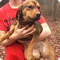Adopt A Pet :: Sally in Ct - Manchester, CT