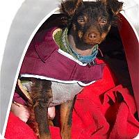 Adopt A Pet :: Vito - Mahopac, NY