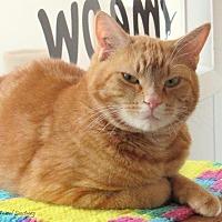 Adopt A Pet :: Kristoff - Hartville, WY