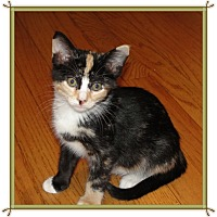 Adopt A Pet :: Sherrie - Mt. Prospect, IL