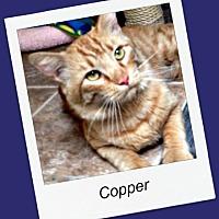 Adopt A Pet :: Copper - Tombstone, AZ