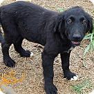 Adopt A Pet :: Alec - Niagra Falls, NY