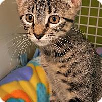 Adopt A Pet :: Buttons - Chesapeake, VA