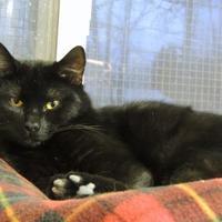 Adopt A Pet :: Ollie - Westville, IN