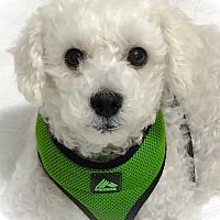 Adopt A Pet :: Prinni - Staten Island, NY