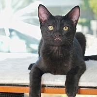 Adopt A Pet :: Babe - Coronado, CA