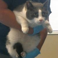 Adopt A Pet :: 653341 - Bakersfield, CA