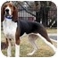 Photo 2 - Treeing Walker Coonhound Mix Dog for adoption in Overland Park, Kansas - Tilly