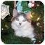 Photo 1 - Domestic Mediumhair Cat for adoption in Mesa, Arizona - Frankie